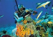 Daily diving tours